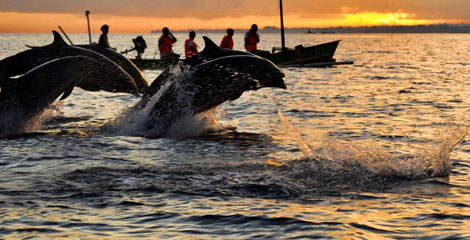 3.Pantai-Lovina-Menikmati-Sisi-Lain-Bali-Bersama-Lumba-Lumba.3