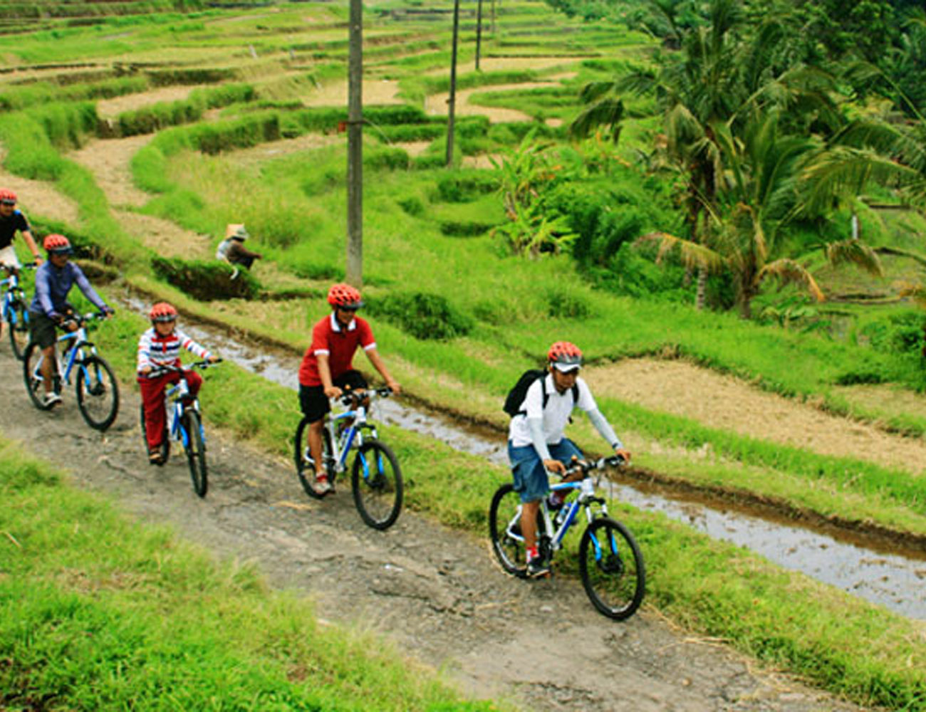 cycling-banner-2